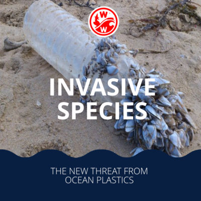 The new threat from ocean plastics – invasive species